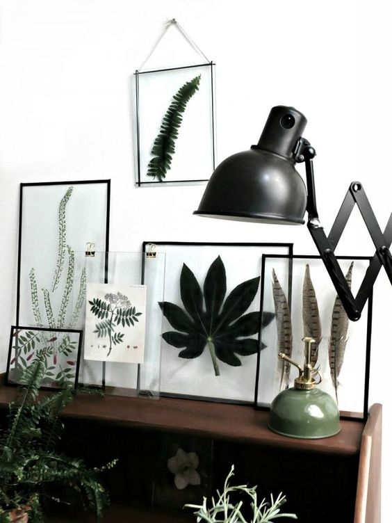 Poster plant