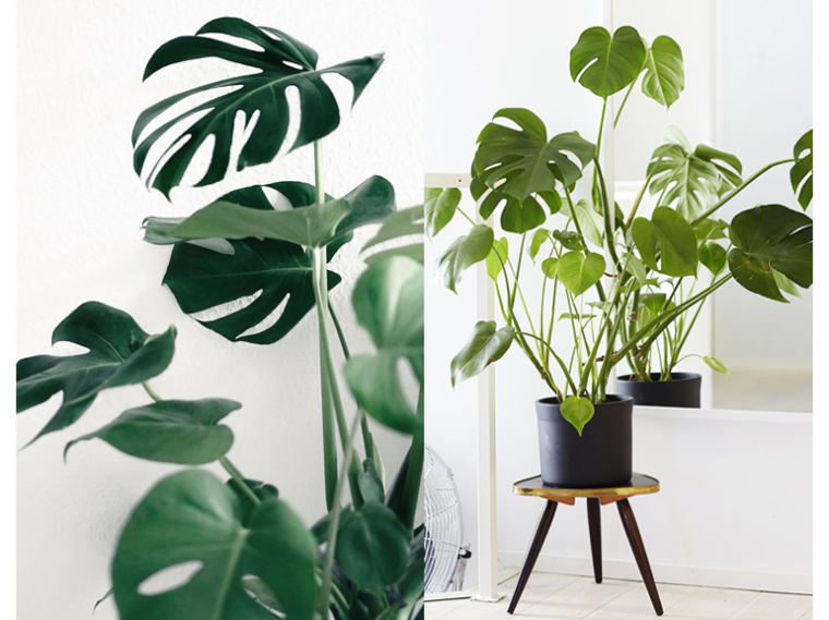 Plant power! | Furnlovers.nl