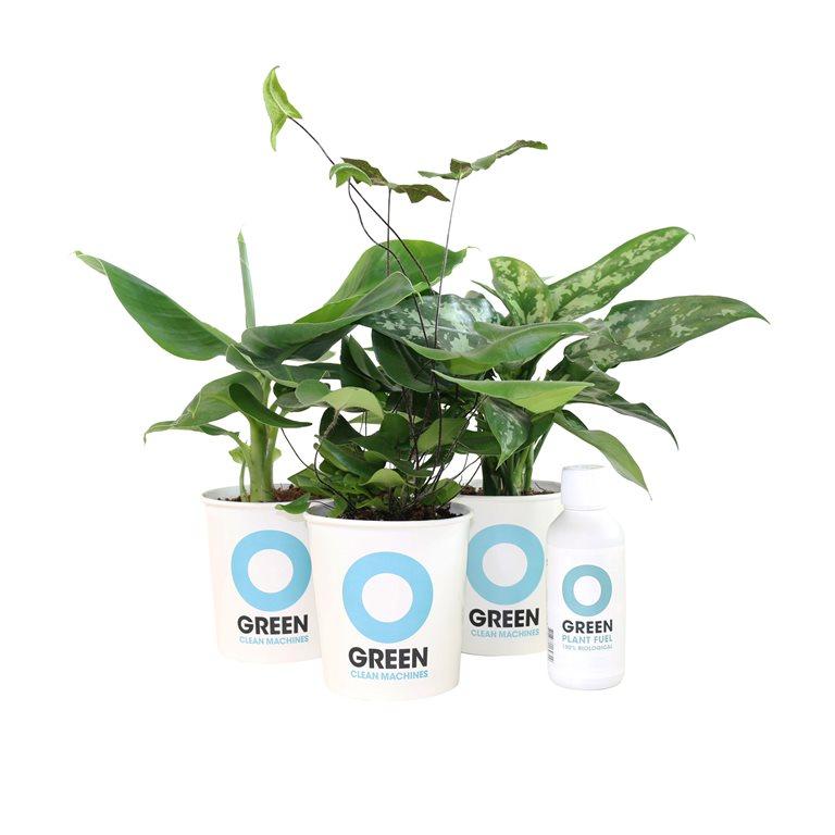 Ogreen plantennnn