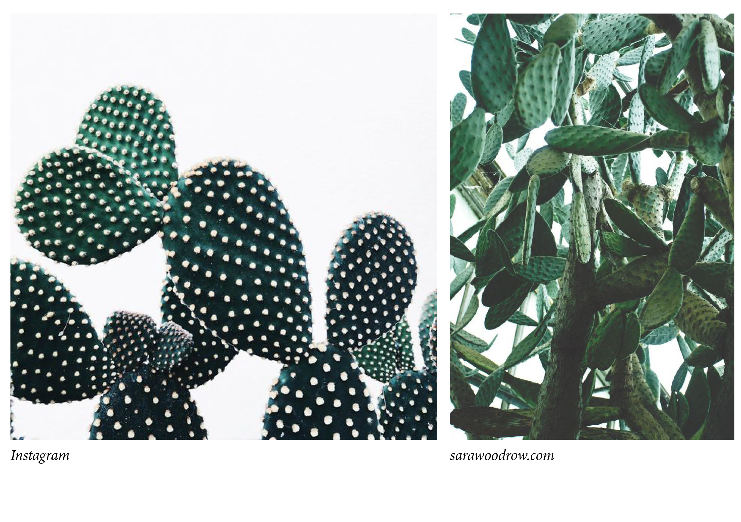 cactus collage 2
