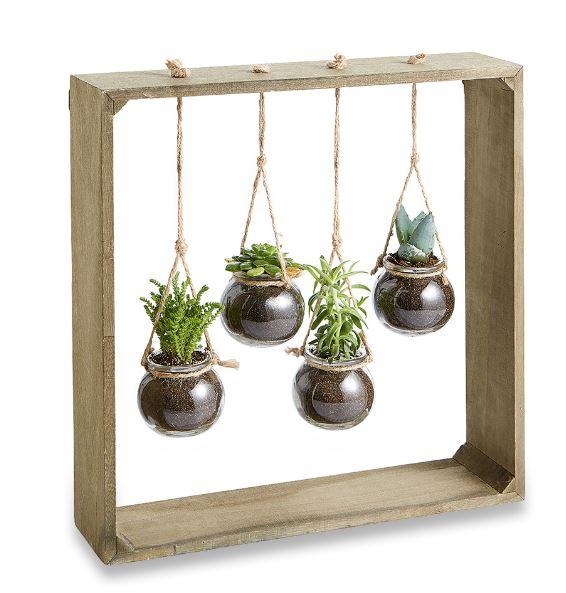 hangende-plantjes