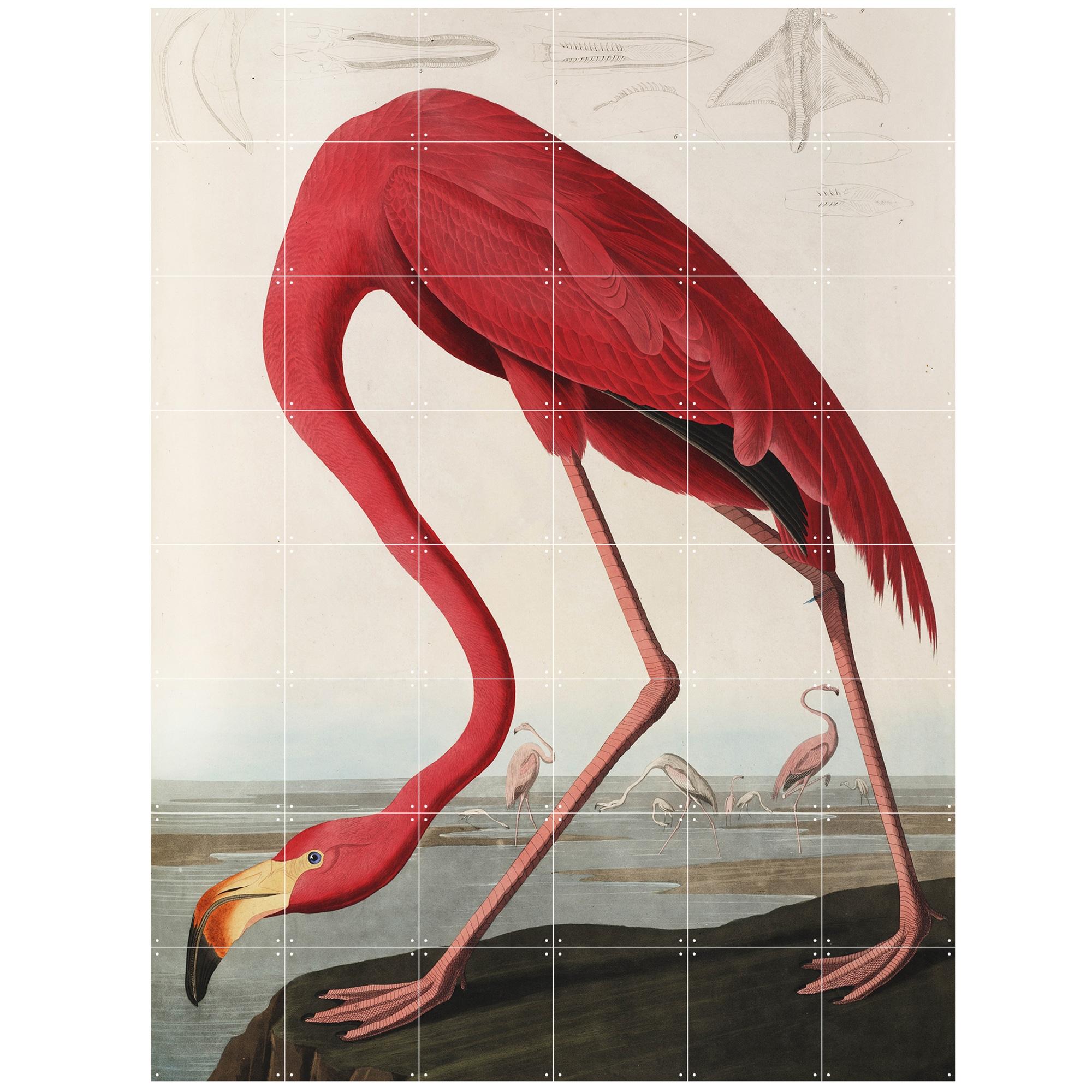 ixxi-teylers-museum-flamingo-wandsysteem-120-x-160