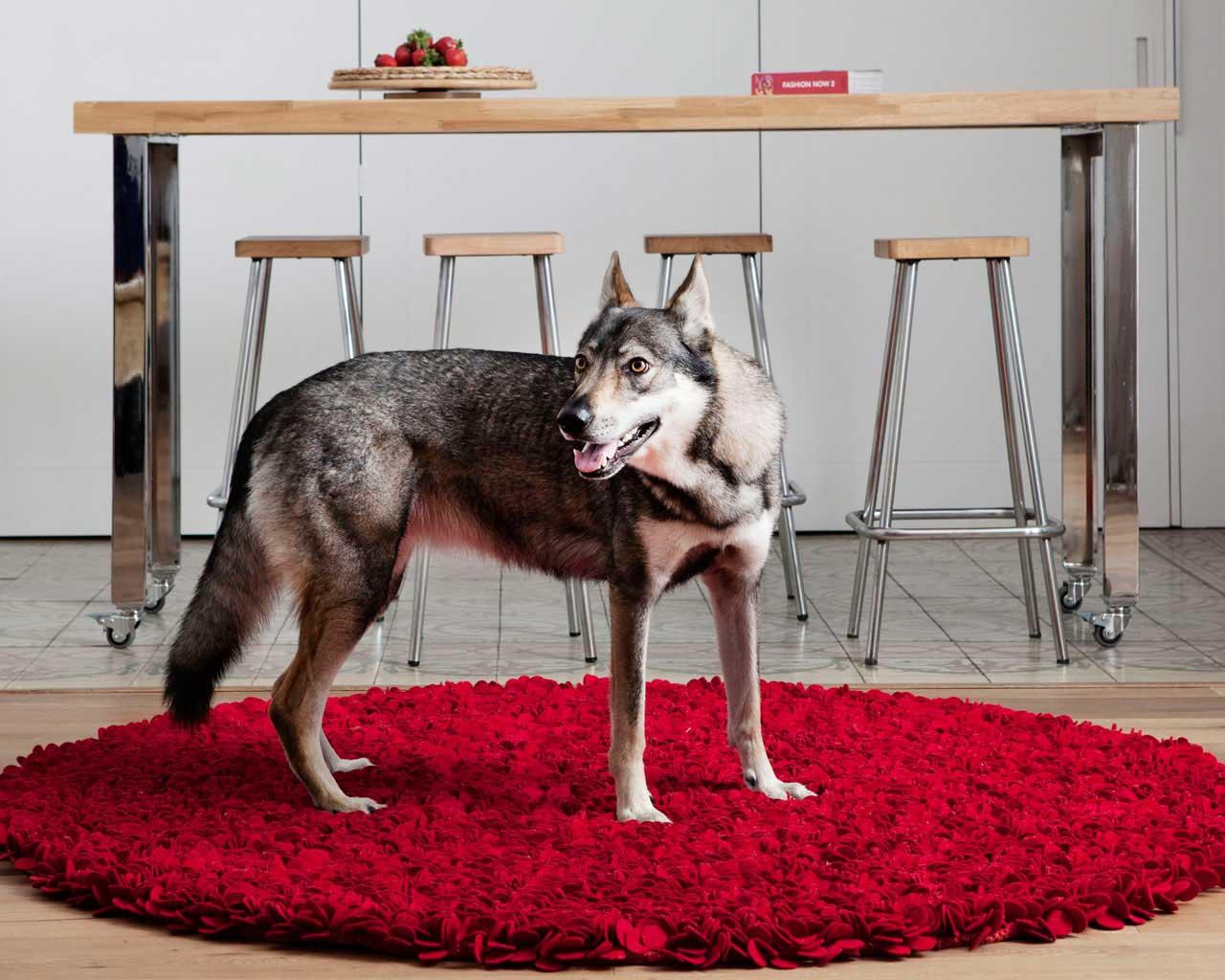 rode-wollen-tapijten-online-hond-keuken-ideaal