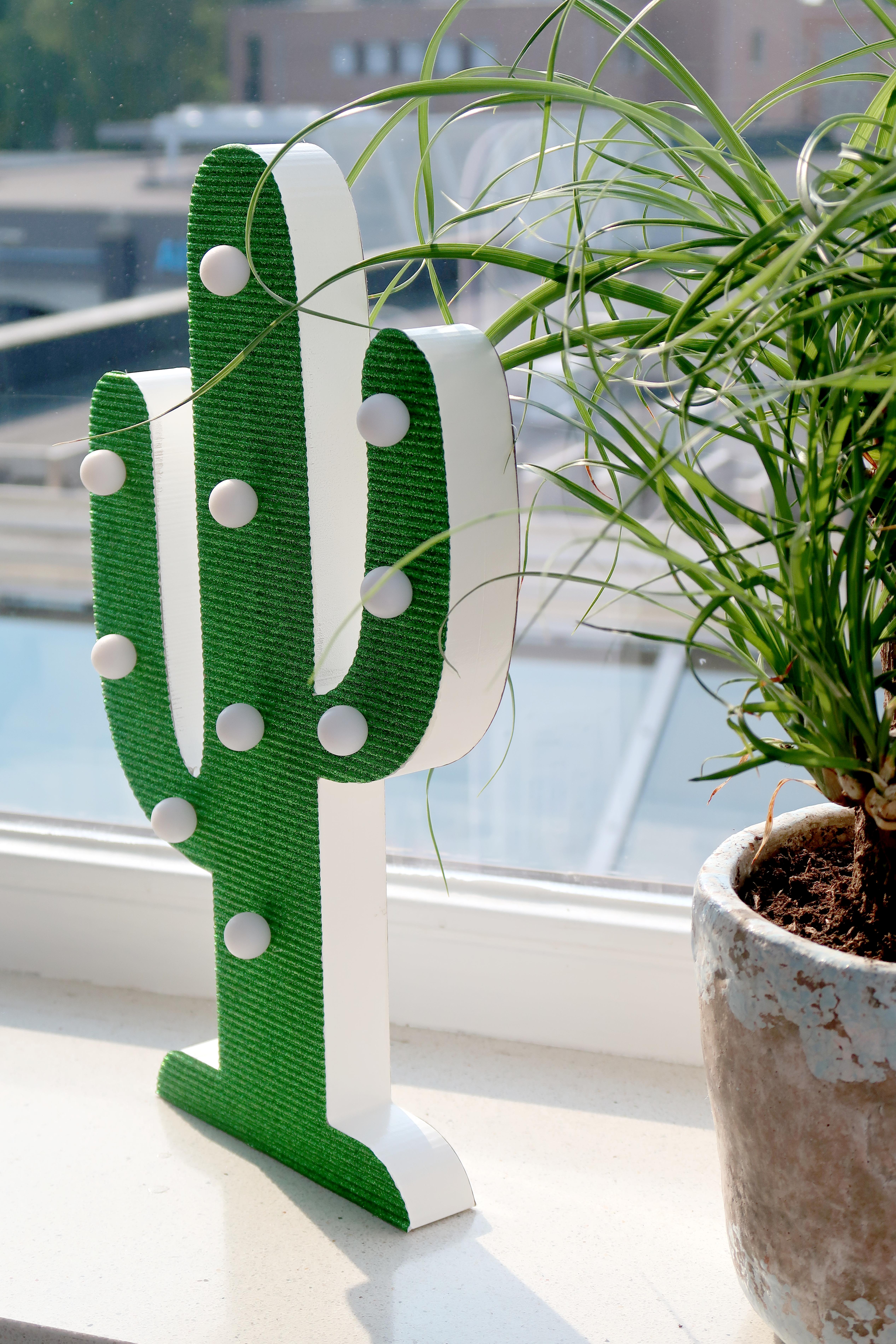 Lesara-cactus3