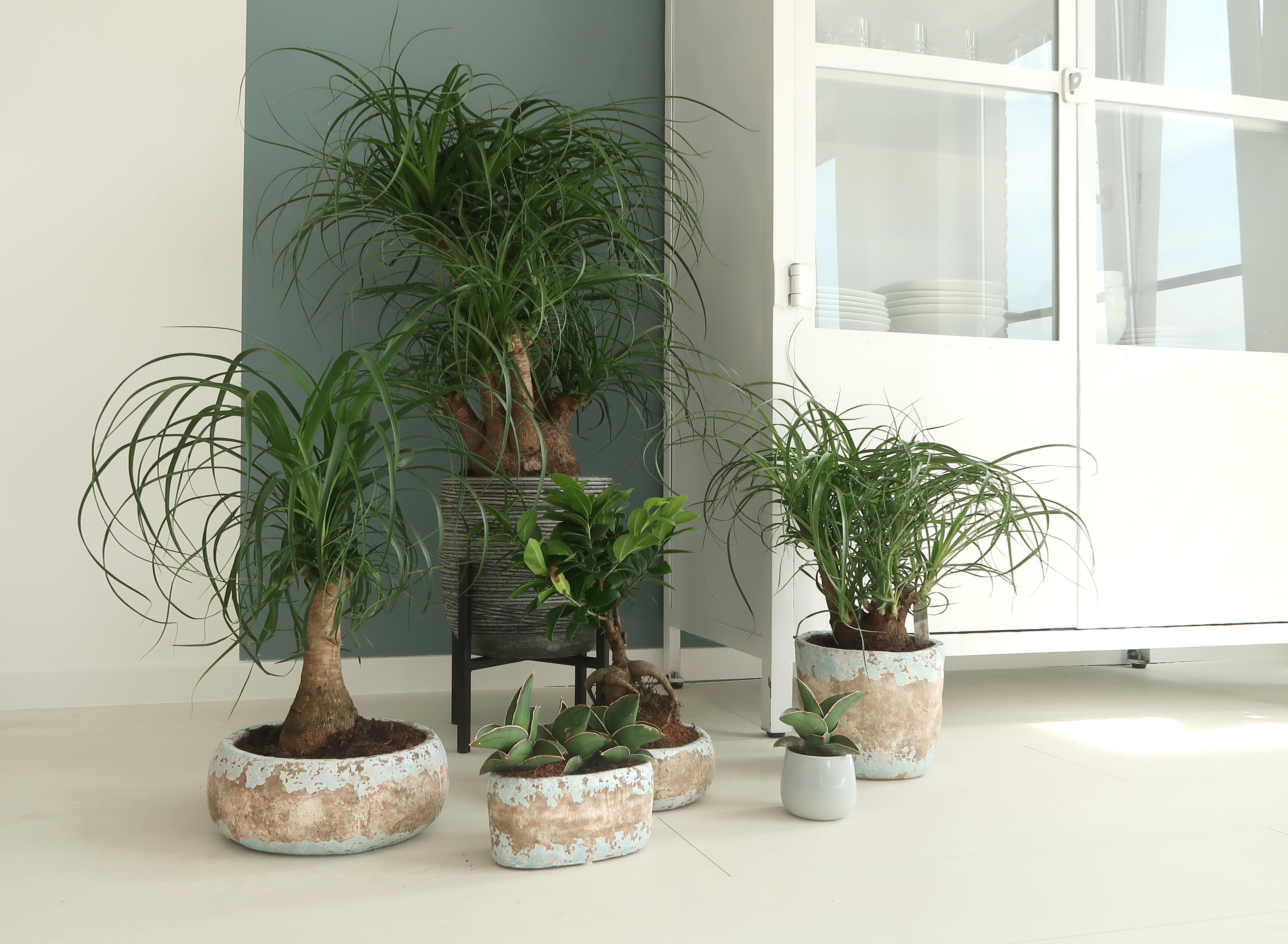 Planten3